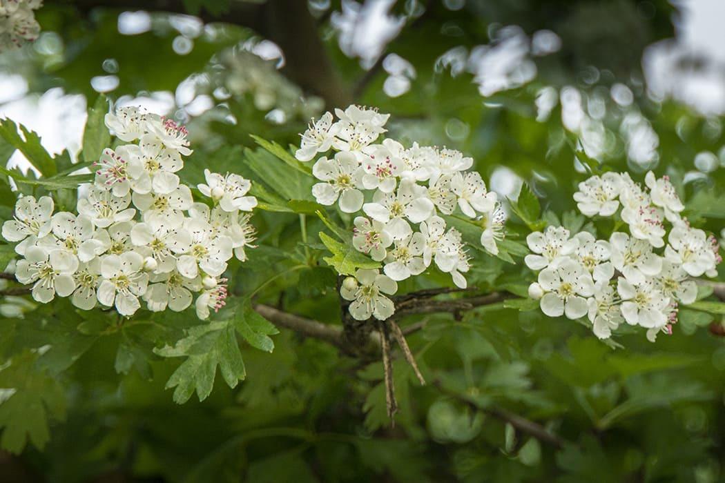 Plants in the UK 「つつじ」は英語で何でしょう? 77の植物の英語表現 ...